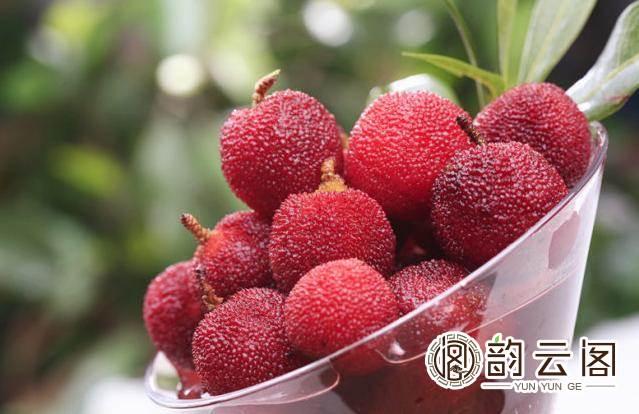 苏州东山杨梅